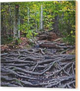 Climbing The Rocks And Roots Of Bald Mountain Wood Print