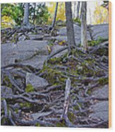 Climbing The Rocks Of Bald Mountain Wood Print