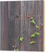 Climbing The Wall Wood Print