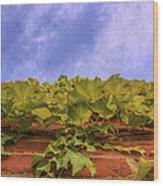 Climbing The Walls - Ivy - Vines - Brick Wall Wood Print