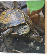 Climbing Turtle Wood Print