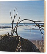 Clinging To The Rocks Wood Print