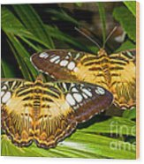 Clipper Butterflies Wood Print