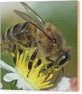 Close Encounter Of The Bee Kind Wood Print
