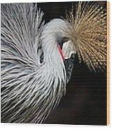 Close Portrait Of A Grey Crowned Crane Wood Print