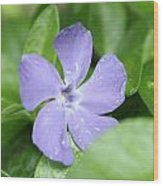 Close Purple Flower Wood Print