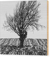 Close Tree In Snow Wood Print