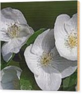 Close Trio Of White Flowers Wood Print