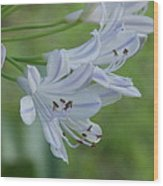 Close Up - African Lily Wood Print