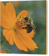 Close Up Bee Feeding On Orange Cosmos Wood Print