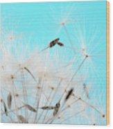Close-up Dandelion Seeds Against Blue Wood Print
