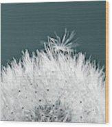 Close-up Dandelion Seeds, Prague, Czech Wood Print