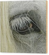 Close-up Details Of Gypsy Vanner Horse Wood Print