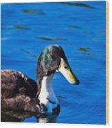 Close Up Duck Wood Print