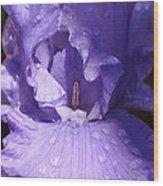 Close Up Morning Iris Wood Print