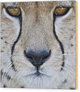 Close-up Of A Cheetah Acinonyx Jubatus Wood Print