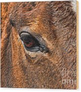 Close Up Of A Horse Eye Wood Print by Paul Ward
