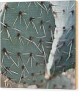 Close-up Of A Prickly Pear Cactus Wood Print