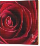 Close Up Of A Red Rose Wood Print