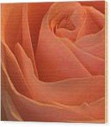 Close Up Of A Rose Bud Wood Print