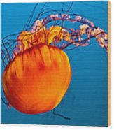 Close Up Of A Sea Nettle Jellyfis Wood Print