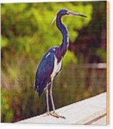 Close-up Of An Blue Egret, Boynton Wood Print
