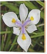 Close Up Of An Iris Wood Print