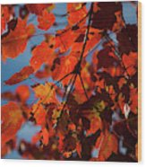 Close Up Of Bright Red Leaves With Blue Wood Print