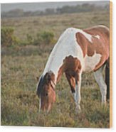 Close Up Of Brown And White New Forest Pony Horse At Sunrise In  Wood Print