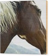 Close-up Of Brown Pinto Pony With White Wood Print