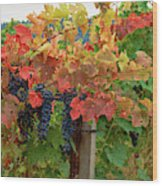 Close-up Of Cabernet Sauvignon Grapes Wood Print