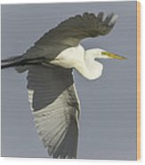 Close Up Of Great Egret In Flight Wood Print