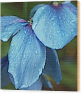 Close-up Of Himalayan Poppy Flowers Wood Print