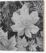 Close Up Of Leaves Wood Print
