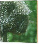 Close Up Of Mr Porcipine Wood Print