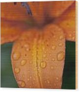 Close-up Of Orange Lily Flower After Wood Print