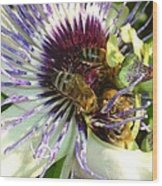 Close Up Of Passion Flower With Honey Bee  Wood Print