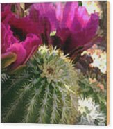 Close Up Of Pink Cactus Flowers Wood Print