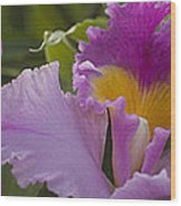 Close-up Of Purple Orchid Flowers Wood Print