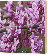 Close-up Of Redbud Tree Blossoms Wood Print
