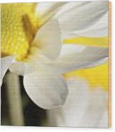Close Up Of White Daisy Wood Print