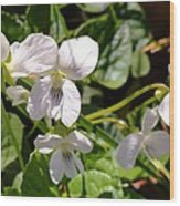 Close-up Of White Violets  Wood Print