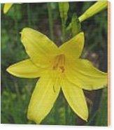 Close Up Of Yellow Mini Dayliliy Wood Print