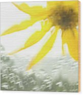 Close-up Of Yellow Wildflower In Grand Wood Print