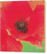 Close Up Poppies Wood Print