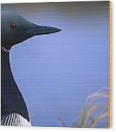 Close Up Portrait Of An Arctic Loon Wood Print