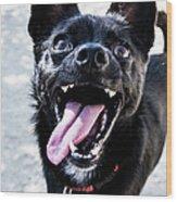 Close-up Shot Of A Little Black Dog - Wood Print