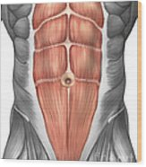 Close-up View Of Male Abdominal Muscles Wood Print
