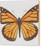 Closeup Of A Butterfly Wood Print
