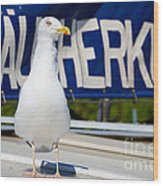 Closeup Of A Seagull On A Fisher Boat  Wood Print
